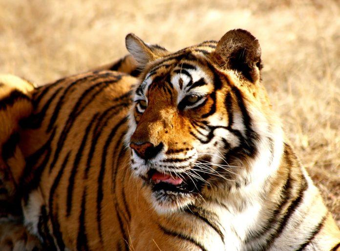 list-of-tiger-reserve
