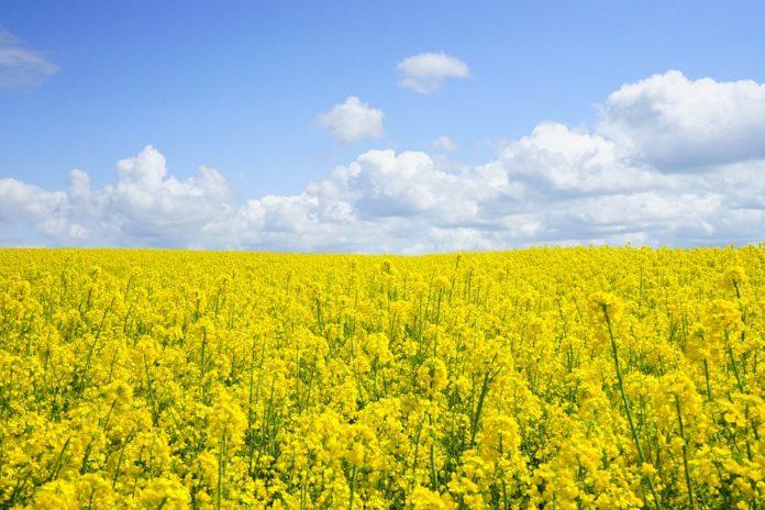 crop-producing-districts-of-mp-मध्यप्रदेश