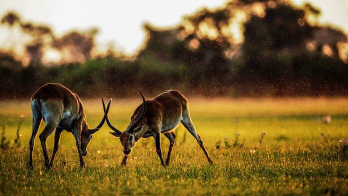 wild animal sanctuary in chhattisgarh