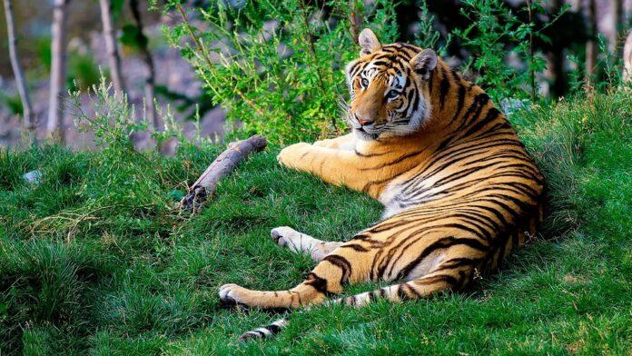 wildlife-sanctuary-in-bihar-in-hindi